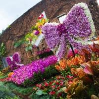 県内最大級の花イベント。華やかに装飾された洋蘭博覧会