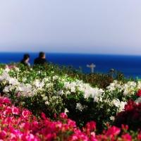 海も見渡せる沖縄最北端の花カーニバル『東村つつじ祭り』に行ってきた。