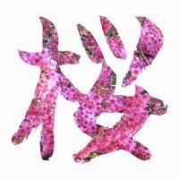 日本一早い桜まつり!沖縄で観測史上最も早い桜はいつ?