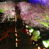 幻想的な花見を堪能!世界遺産「今帰仁城跡」のライトアップを見逃すな!