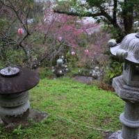雨の日。『名護さくら祭り』前日の公園は神秘的な雰囲気だった